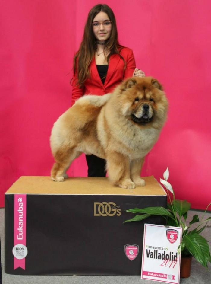 Handling Helena Terrados Foto cortesía de Sylvia Garcia Andrade Dog Show