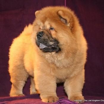 ib home 1 17 350x350 Kaoba de los Perros de Bigo