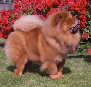 Kaoba de los Perros de Bigo