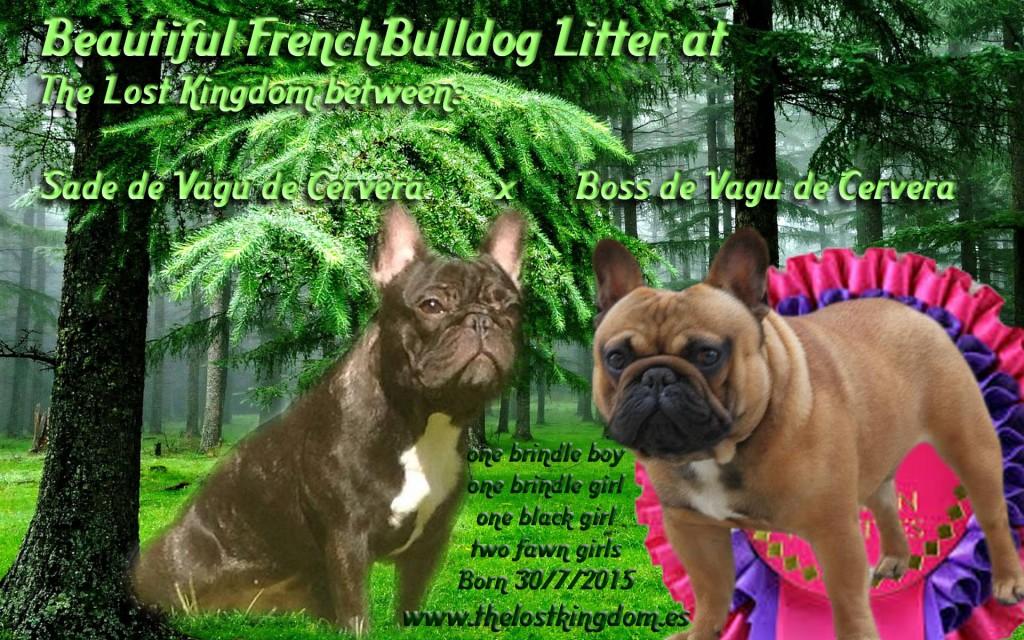 forest wide wallpaper 602448 editado 1 1024x640 Camadas actuales French Bulldog