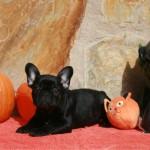 sbHalloween 036 r 150x150 Happy Halloween !!!