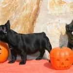 sbHalloween 043 r 150x150 Happy Halloween !!!