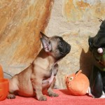 sbHalloween 070 r 150x150 Happy Halloween !!!