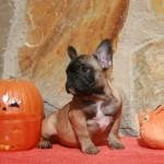 sbHalloween 073 r 150x150 Happy Halloween !!!